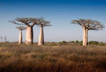 Photo of 4 redenen om een vakantie naar Madagascar te plannen