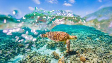 Photo of Plan een vakantie naar Australië in 2021 en droom weg