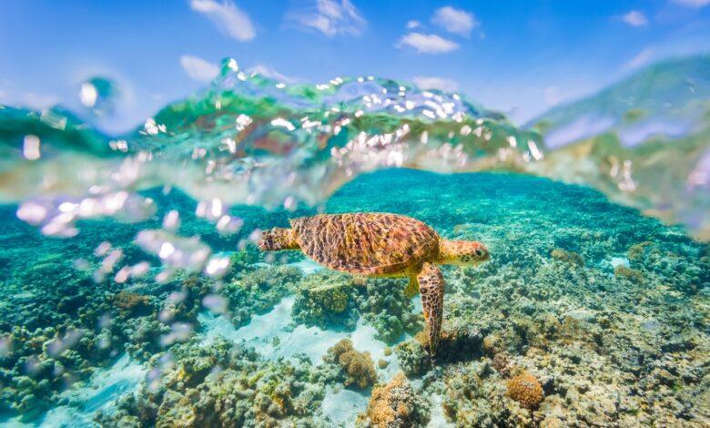 Plan een vakantie naar Australië in 2021 en droom weg