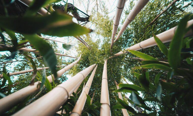 Duurzame alternatieven voor vervuilende kledingstoffen